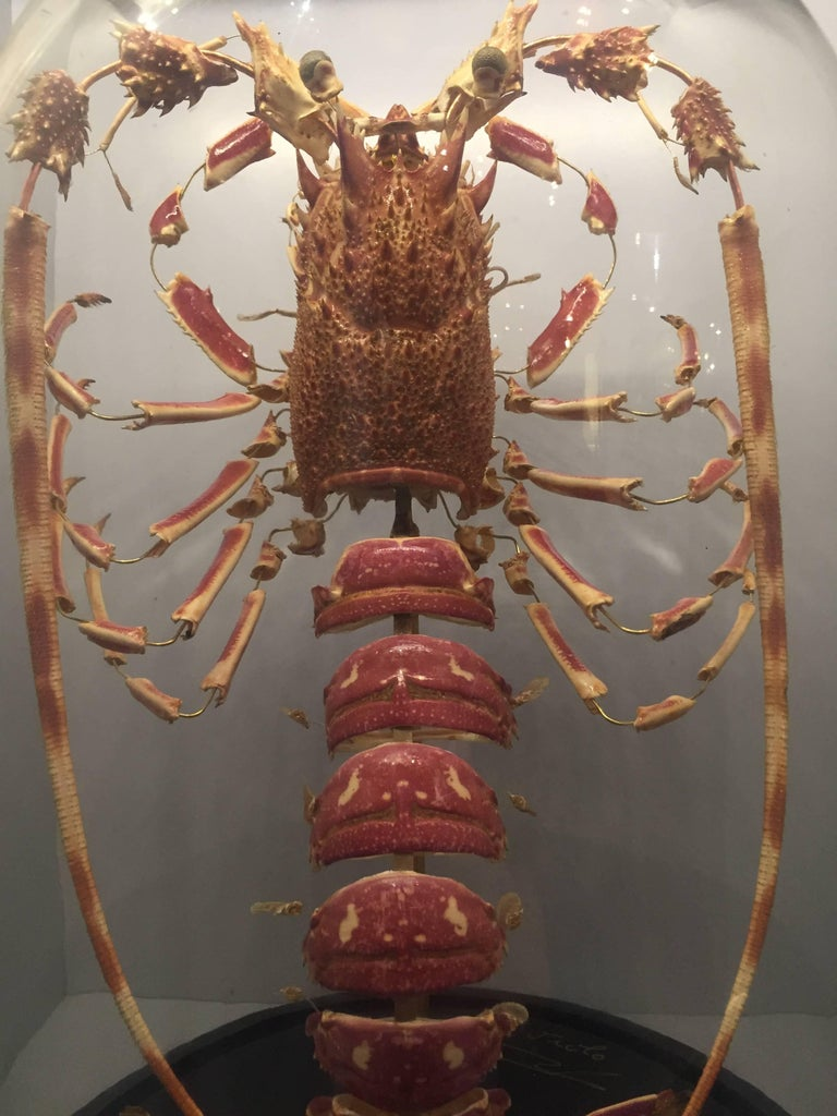 Lobster, Deconstructed, Mounted on a Black Wooden Base in a Glass Dome, France In Excellent Condition In New York, NY