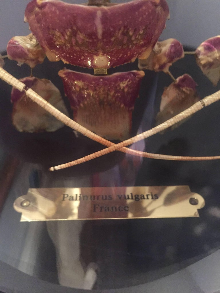 Brass Lobster, Deconstructed, Mounted on a Black Wooden Base in a Glass Dome, France