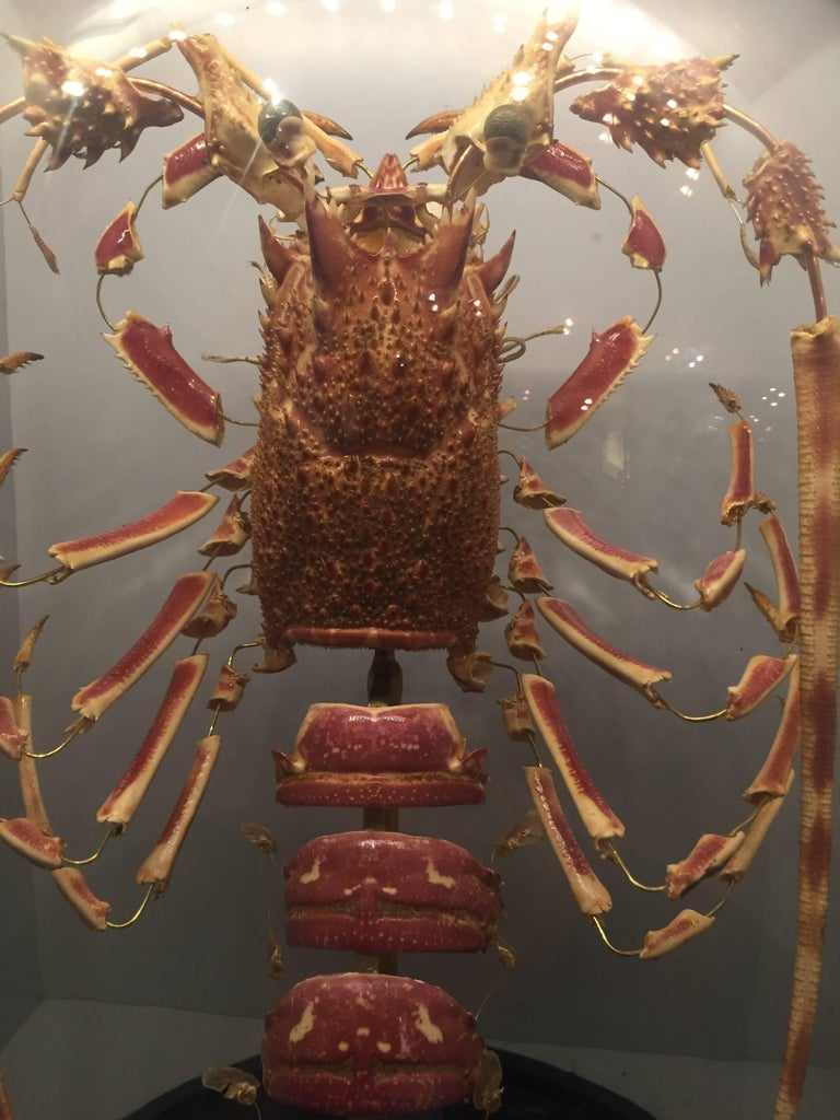 Victorian Lobster, Deconstructed, Mounted on a Black Wooden Base in a Glass Dome, France