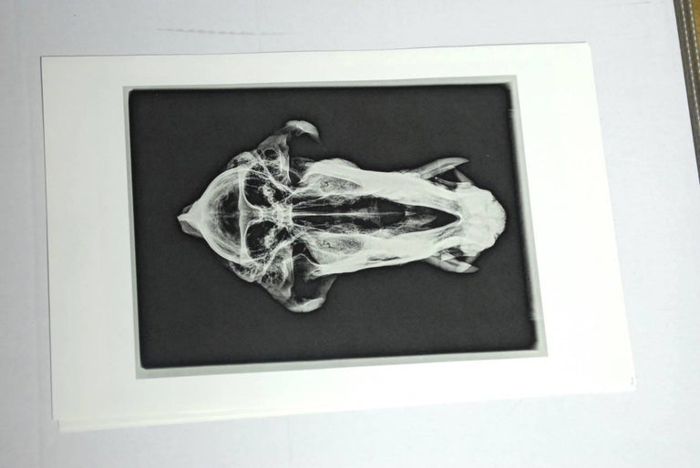 Mid-Century Modern Set of Five X-Rayed Animal Skull Prints For Sale