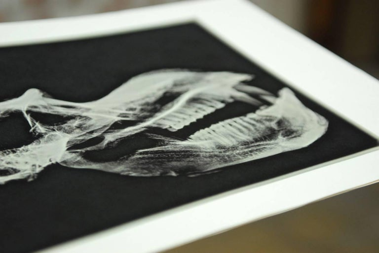 Set of Five X-Rayed Animal Skull Prints For Sale 2