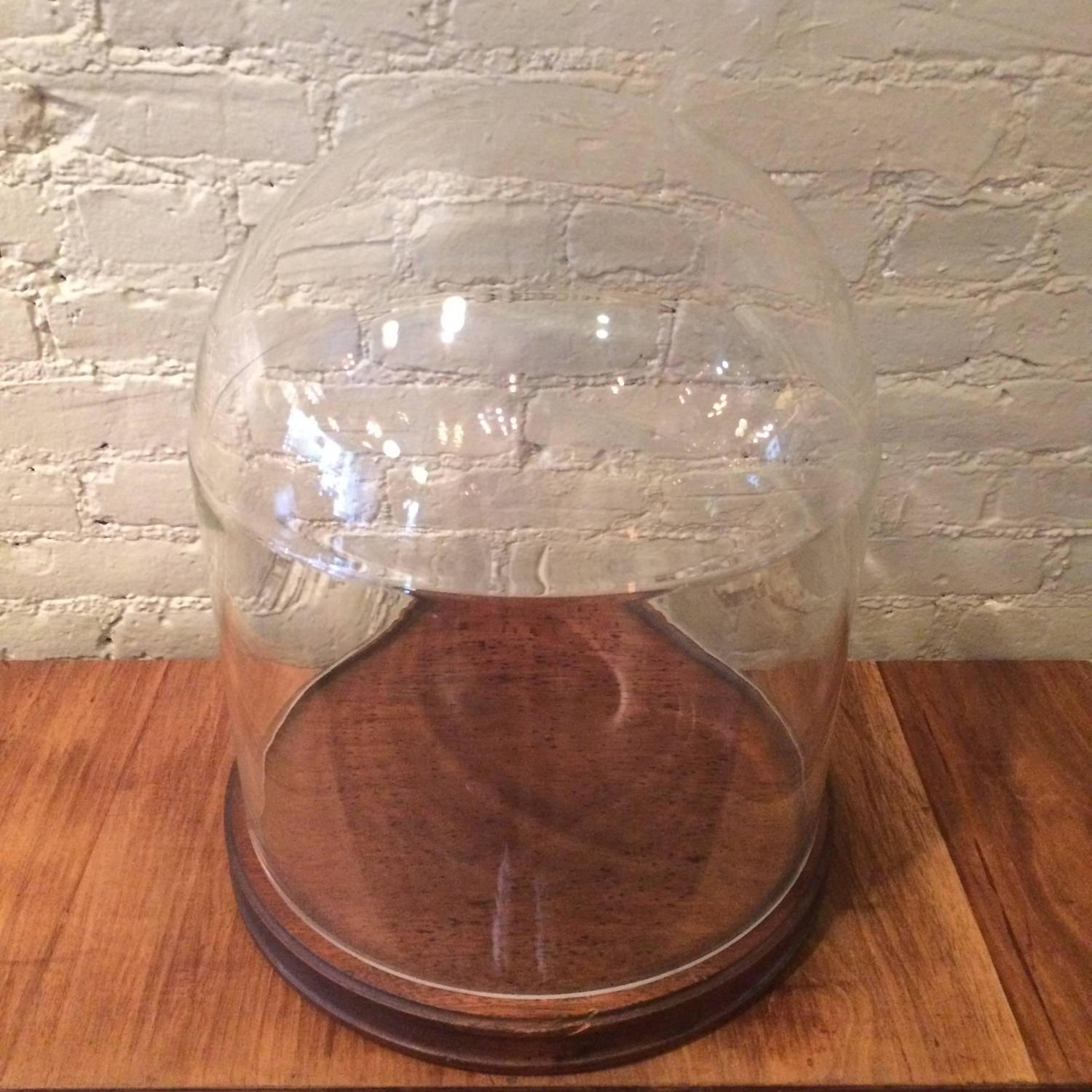 Glass Display Dome Cloche With Walnut Base For Sale At 1stdibs. Full resolution  pic, nominally Width 1500 Height 1500 pixels, pic with #955636.
