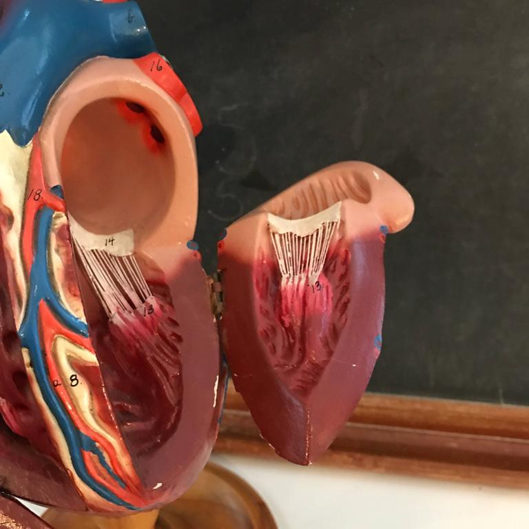 1940s Plaster Anatomical Heart Model on Wood Stand For Sale 4