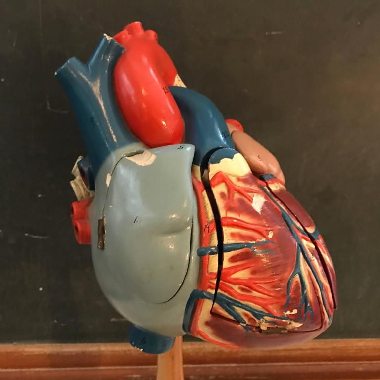 Industrial 1940s Plaster Anatomical Heart Model on Wood Stand For Sale