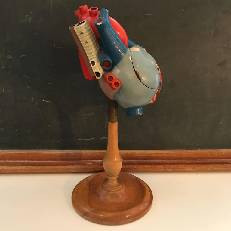 American 1940s Plaster Anatomical Heart Model on Wood Stand For Sale