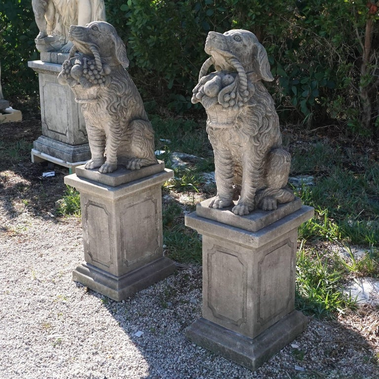 A pair of vintage hunting dogs holding each a basket on base, and facing each other, circa 1930. Hand-carved in limestone. Prov. from an estate in near San Gimignano, Tuscany. The original plinths with decorative bevelled fields are provided.