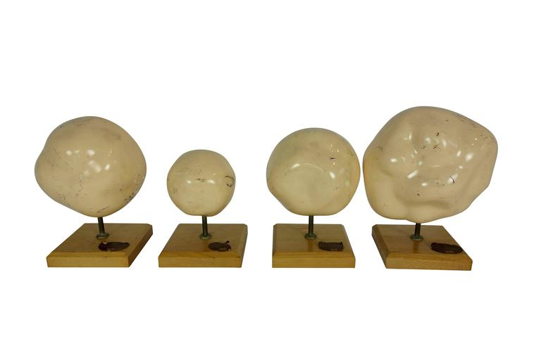 Mid-20th Century Set of Four Mueller-Ward 3d Cellular Mitosis Biology Models Copyright, 1941