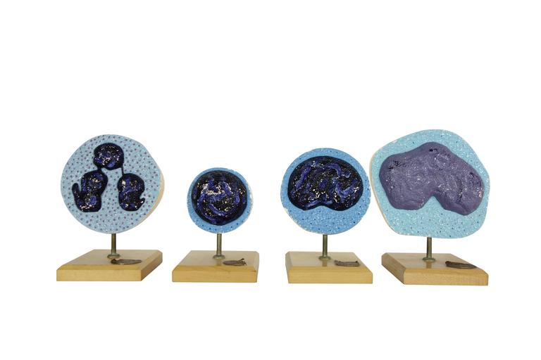 This is a set of four Mueller-Ward 3D cellular mitosis biology models, circa 1941.