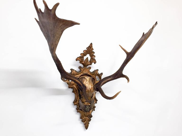 Carved Habsburg Fallow Trophy Pair on French Gilt Plaque with Original Gorget For Sale