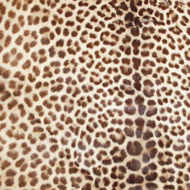 Authentic Antique Leopard Skin Rug Discovered In France At