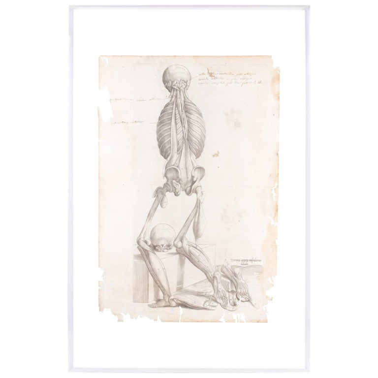 16th Century Andreas Vesalius Anatomical Print on Acrylic For Sale