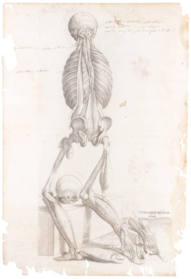 These antique anatomical prints from Andreas Vesalius along with antique pages of text from a medical text entitled Anatomes totius were originally printed in 1569. Both age and use have contributed to the beauty of these antique pages. The worm