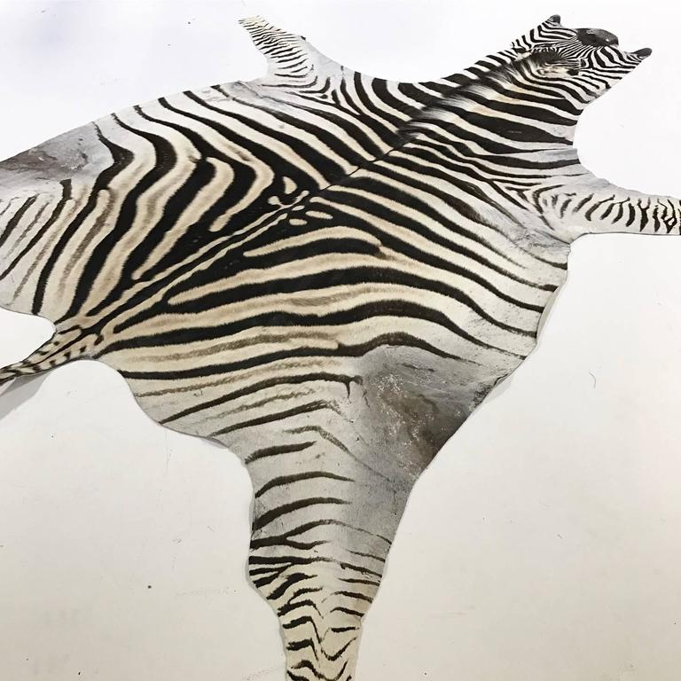 Forsyth zebra hides are hand selected with a critical eye for their one-of-a-kind coloring, stripe patterns and natural markings by the Forsyth team. Each hide is unique and meets our high standards of hair quality, tanning excellence and size.