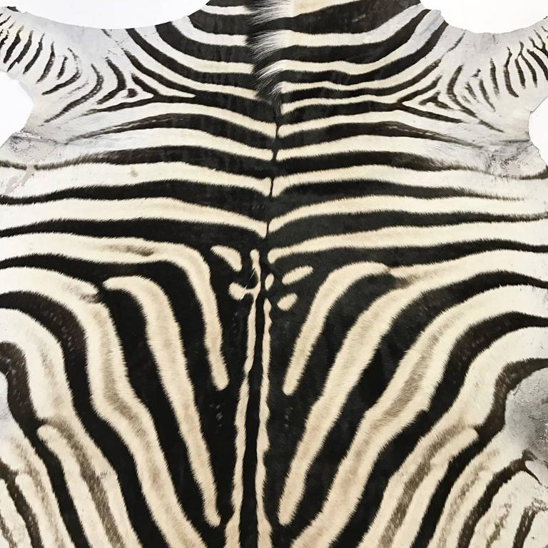 Zebra Hide Rug In Excellent Condition For Sale In SAINT LOUIS, MO