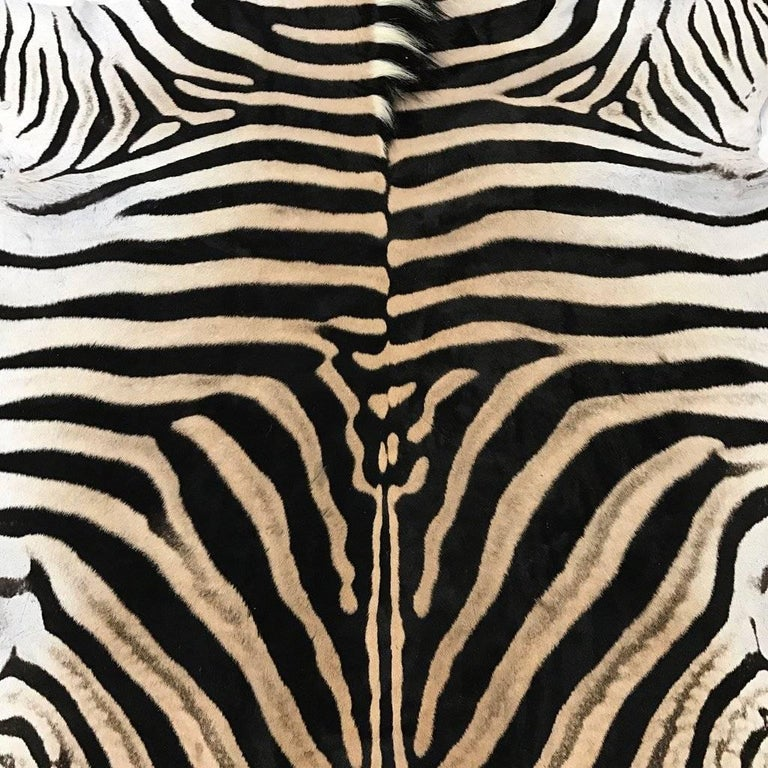 Forsyth zebra hides are hand selected with a critical eye for their one-of-a-kind coloring, stripe patterns, and natural markings by the Forsyth team. Each hide is unique and meets our high standards of hair quality, tanning excellence, and size.