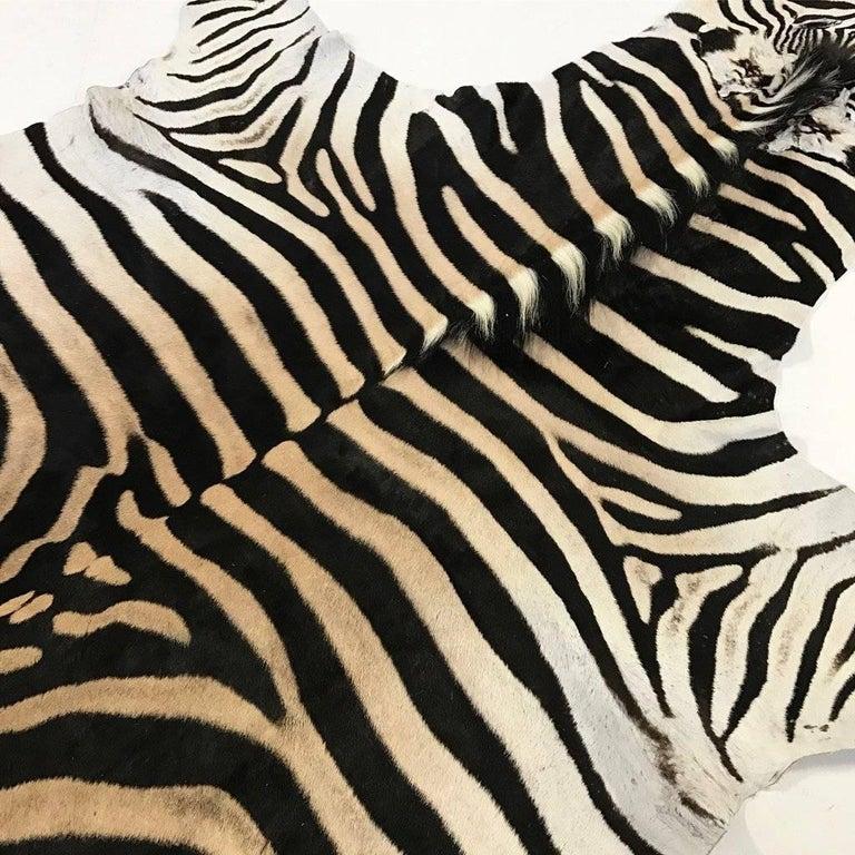 South African Zebra Hide Rug For Sale