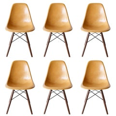 Set of Six Eames Ochre Dark Dsw Herman Miller, USA Dining Chairs