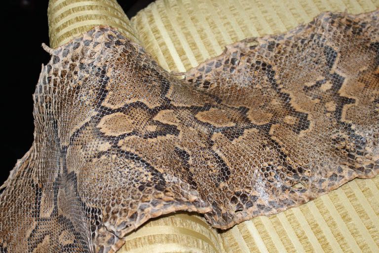 Antique Python Snake Skin At 1stdibs