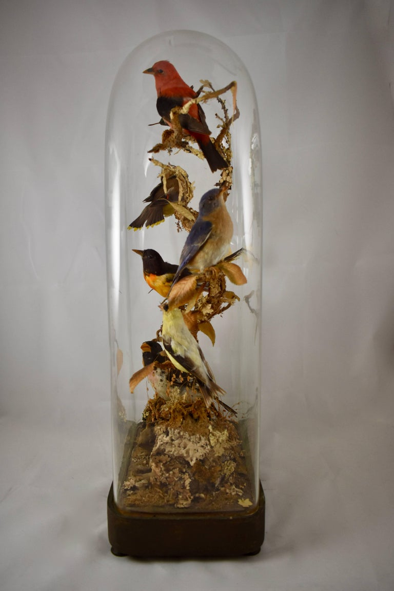 English Victorian Taxidermy Bell Jar Cloche Diorama