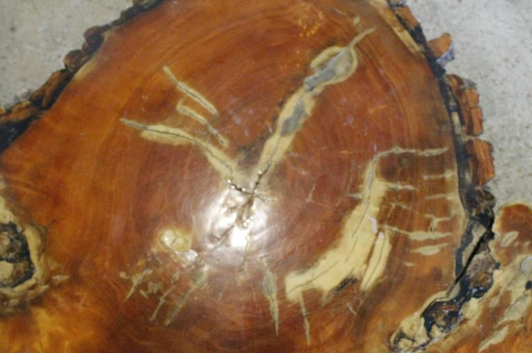 vintage cypress tree trunk coffee or cocktail table for sale at 1stdibs