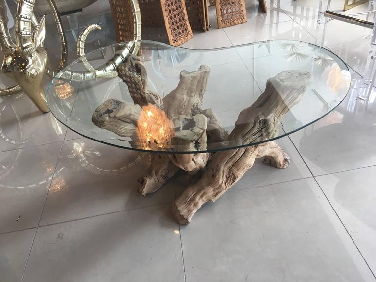 driftwood coffee cocktail glass table palm beach vintage freeform cypress wood for sale at 1stdibs