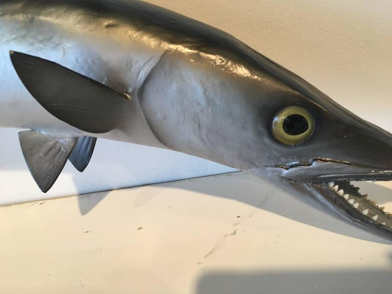 Vintage Taxidermy Barracuda Fish Wall Mount Hanging Palm