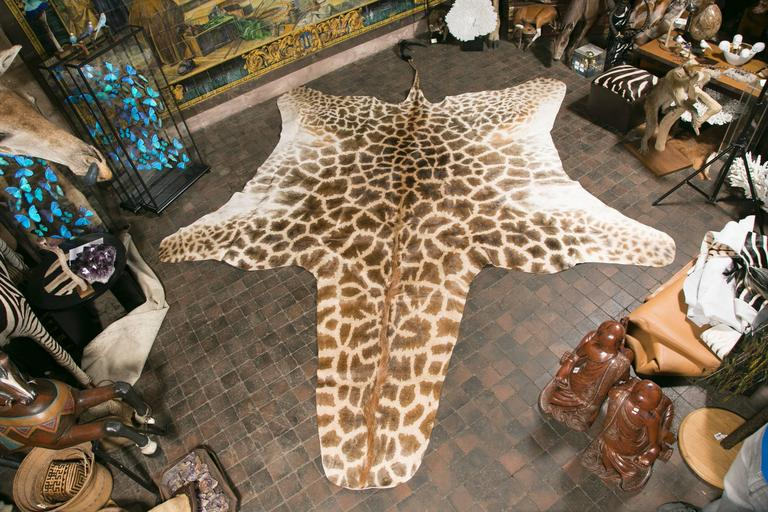 Authentic and Beautiful African Giraffe Skin Rug 2 - Authentic And Beautiful African Giraffe Skin Rug For Sale At 1stdibs