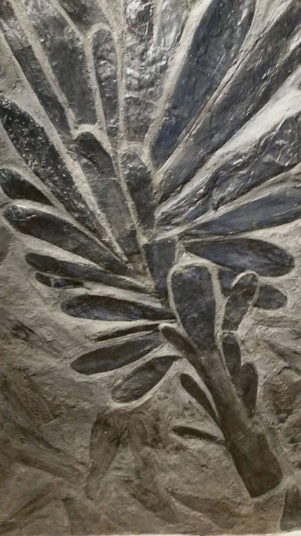 Exceptional Fossil Fern Tree, Monceau Les Mines, France 2