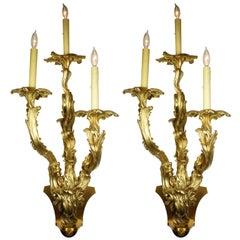 Pair of French 19th Century Louis XV Style Three-Light Gilt-Bronze Wall Lights