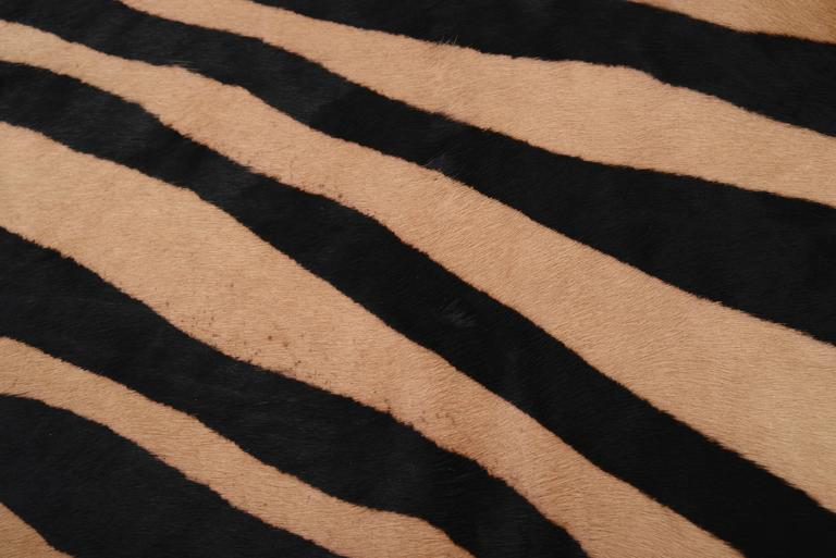 Mid-Century Modern Large Contemporary Zebra Stencil Printed CowHide Hair Rug - Ink on Caramel For Sale
