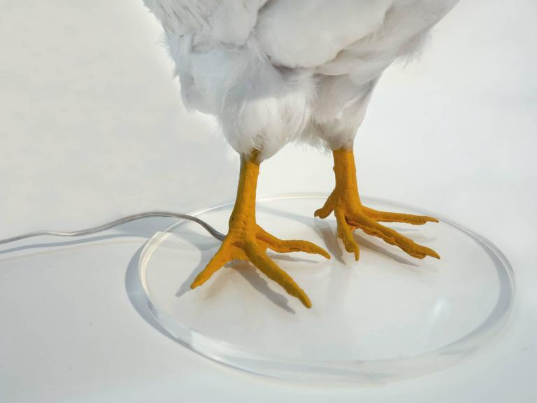 Chicken Lamp by Sebastian Errazuriz For Sale at 1stdibs