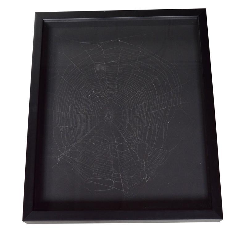 Captured Spider Web