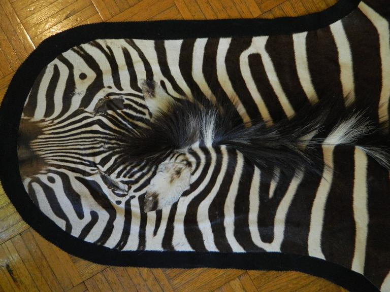 """New great quality Burchel zebra hide Size: 87"""" L x 54"""" W, excluding the tail, Country of origin: South Africa   Please contact us for any other information."""