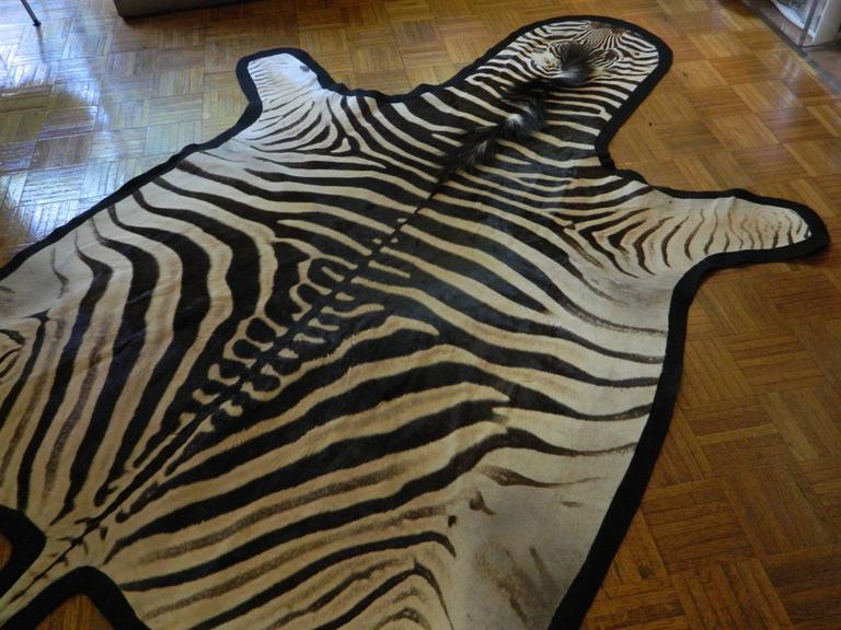 Grade A Equus Burchell Zebra Skin Rug with Felt Backing For Sale 1