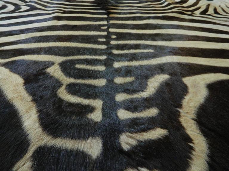 Grade A Equus Burchell Zebra Skin Rug with Felt Backing For Sale 2