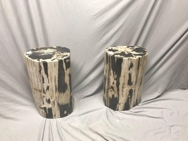 This pair of petrified wood side table is polished on the sides and on the top as well. They are perfect to use as a coffee table or side tables. Petrified wood is extremely versatile even great inside a bathroom shower.  Over time, the petrified