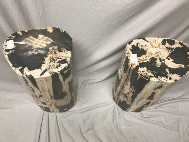 Organic Modern Pair of Polished Petrified Wood Side Tables For Sale