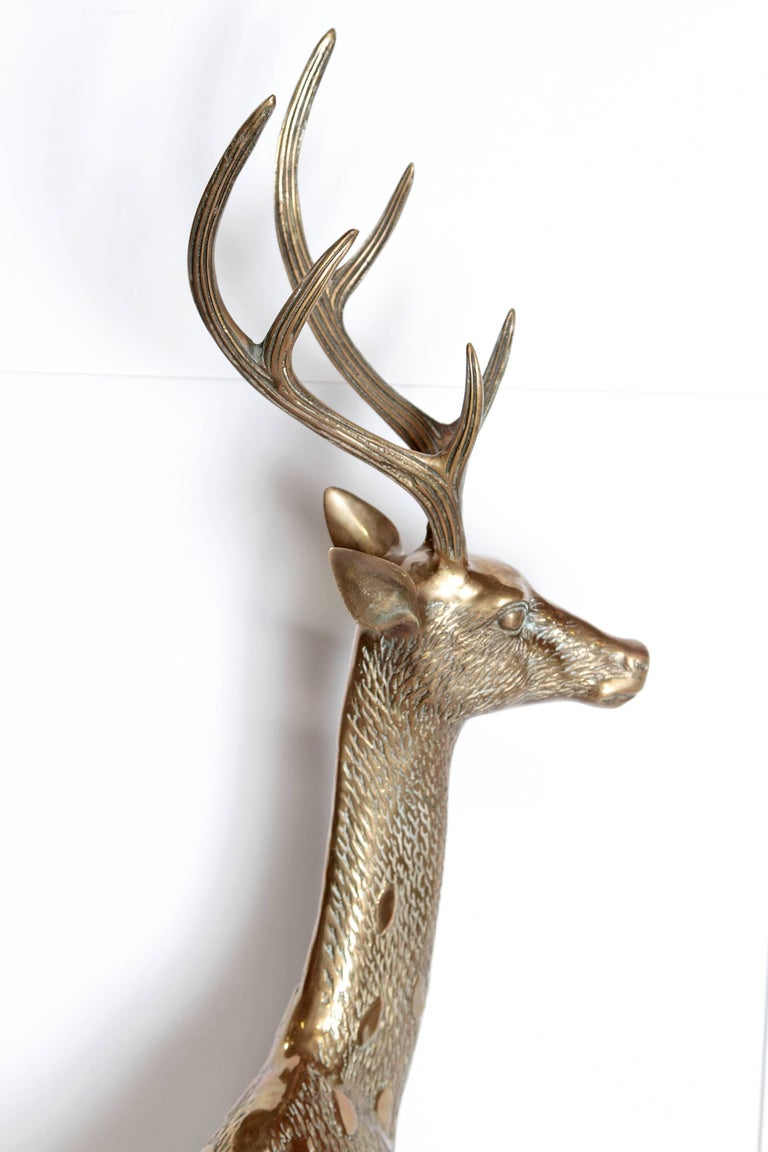 Life-size solid brass deer sculpture in great condition. Measures 50 inches from floor to top of antler and 33 inches from hoof to nose.