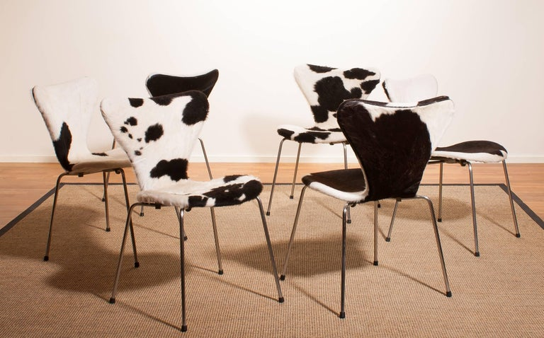 1950s, Cow Fur Leather Model 3107 Dining Chairs by Arne Jacobsen & Fritz Hansen 2