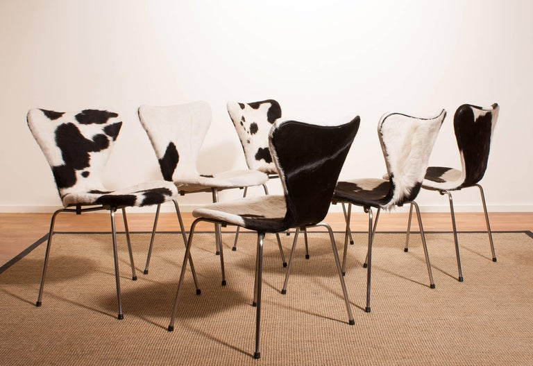 1950s, Cow Fur Leather Model 3107 Dining Chairs by Arne Jacobsen & Fritz Hansen 7
