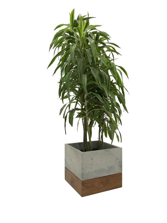 "Modern Cast-Concrete and Solid Walnut ""Planter Box"" 2"