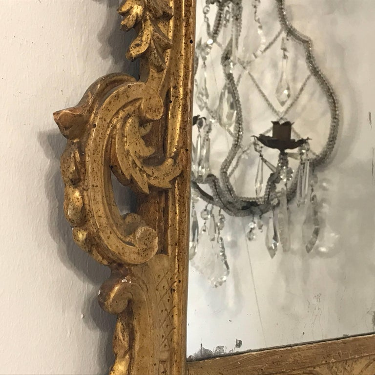 Italian 18th Century Louis XV Mirror Carved Gilt Wood Tuscan Mirror from Lucca For Sale 5