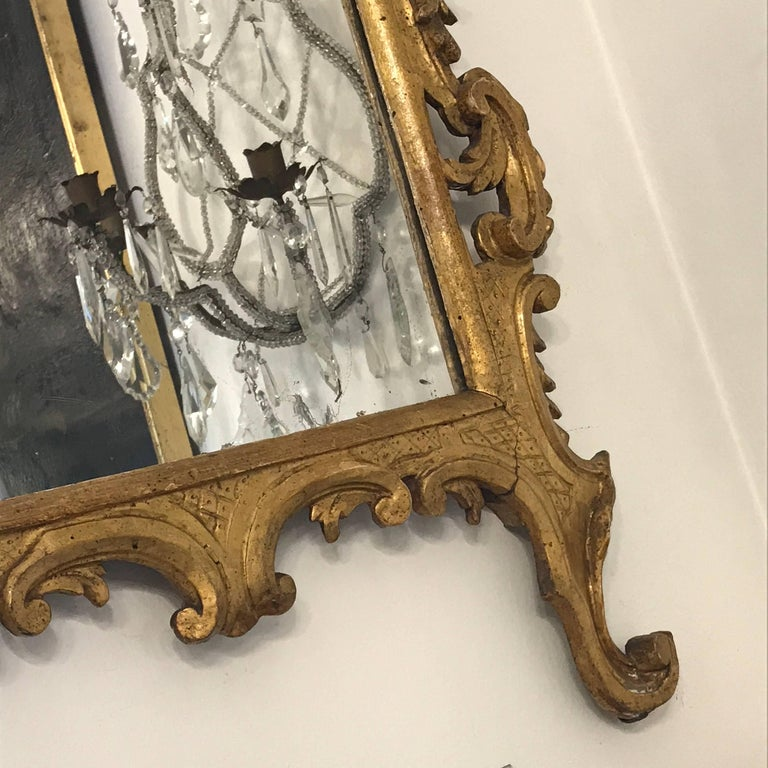 Italian 18th Century Louis XV Mirror Carved Gilt Wood Tuscan Mirror from Lucca For Sale 3
