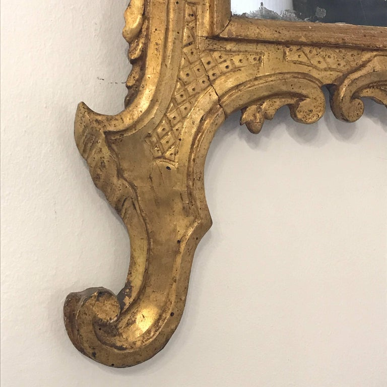 Italian 18th Century Louis XV Mirror Carved Gilt Wood Tuscan Mirror from Lucca For Sale 6