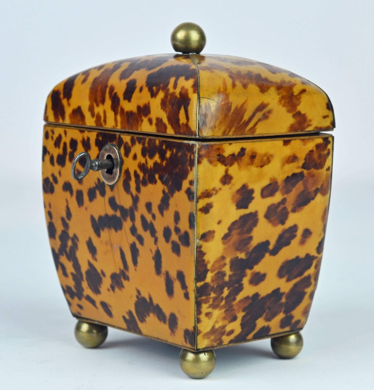 Small Early 19th Century Georgian Tortoise Shell Tea Caddy with Brass Ball Feet 2