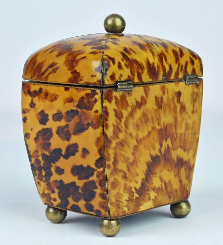 Small Early 19th Century Georgian Tortoise Shell Tea Caddy with Brass Ball Feet 3
