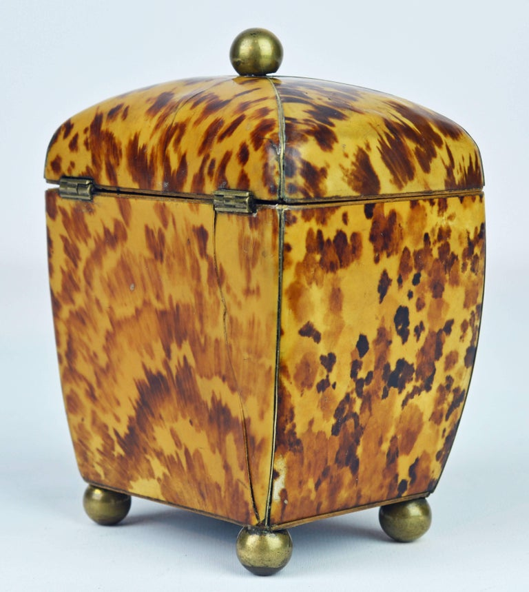 Small Early 19th Century Georgian Tortoise Shell Tea Caddy with Brass Ball Feet 4