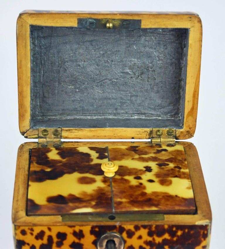 Small Early 19th Century Georgian Tortoise Shell Tea Caddy with Brass Ball Feet 7