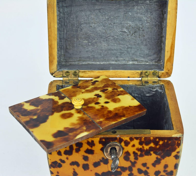 Small Early 19th Century Georgian Tortoise Shell Tea Caddy with Brass Ball Feet 8