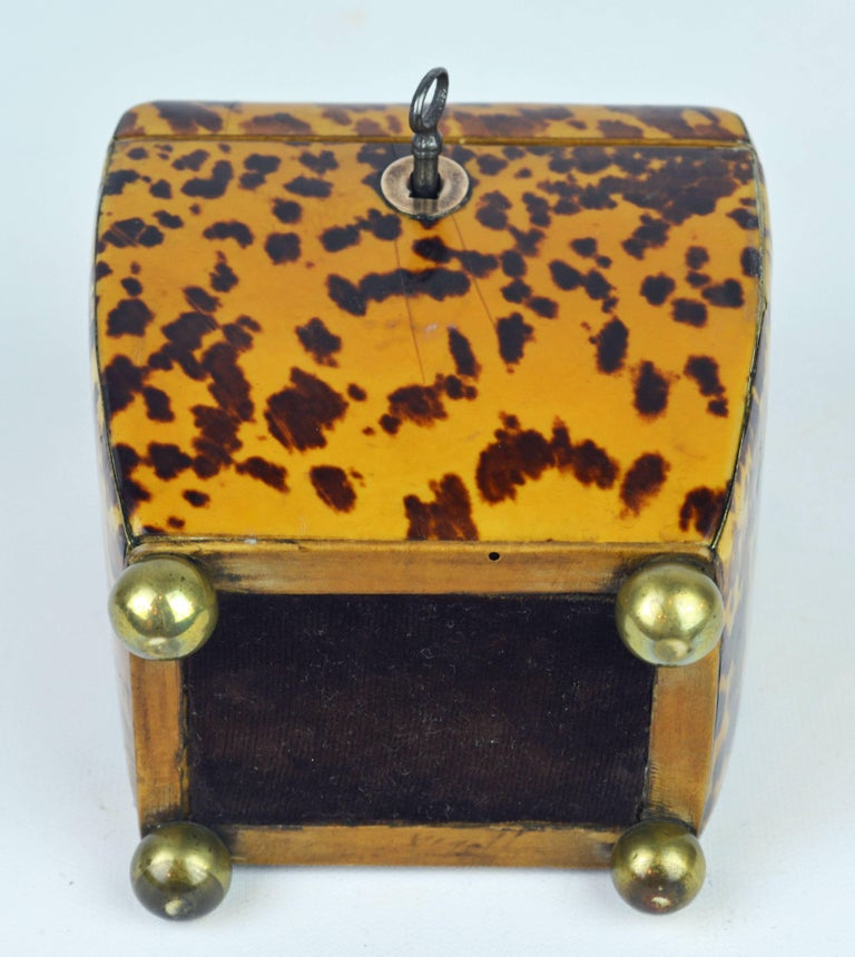 Small Early 19th Century Georgian Tortoise Shell Tea Caddy with Brass Ball Feet 9